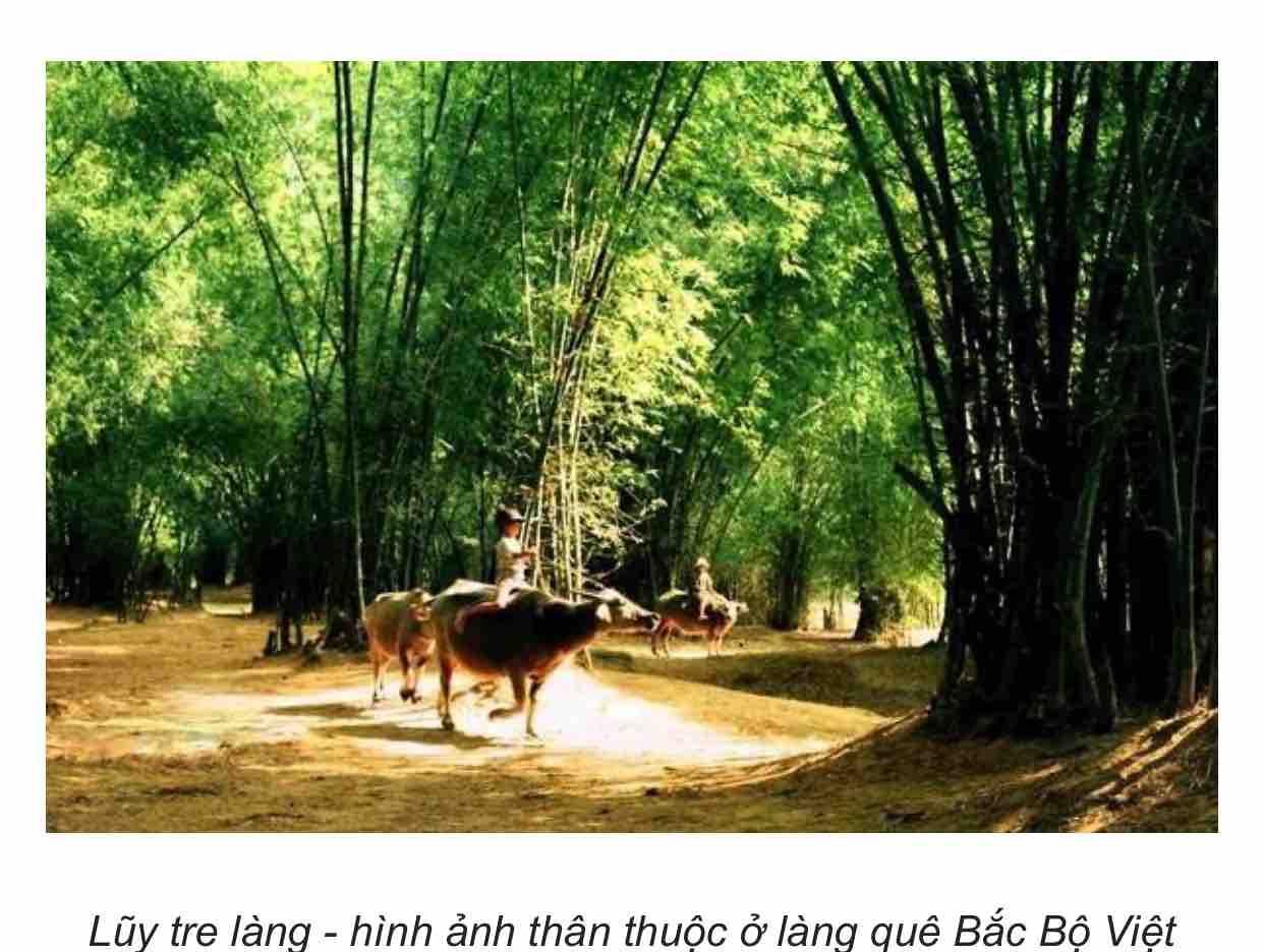 Tình Hoài Hương ( Cố nhạc sỹ Phạm Duy ) - Nhã Trân -