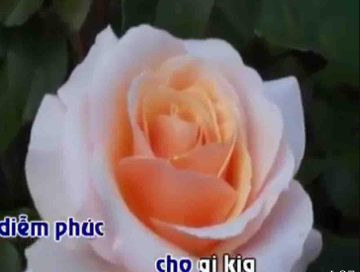 ❄️Một thuở yêu người❄️MINH HAO NGUYEN & PHUONG XANH