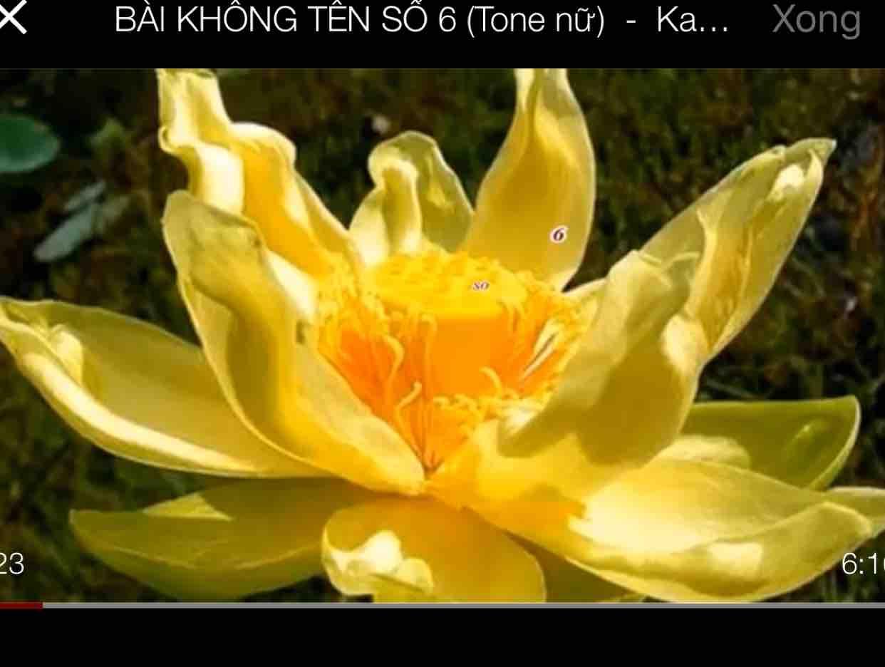BÀI KHÔNG TÊN SỐ 5 - Lê Hồngmai