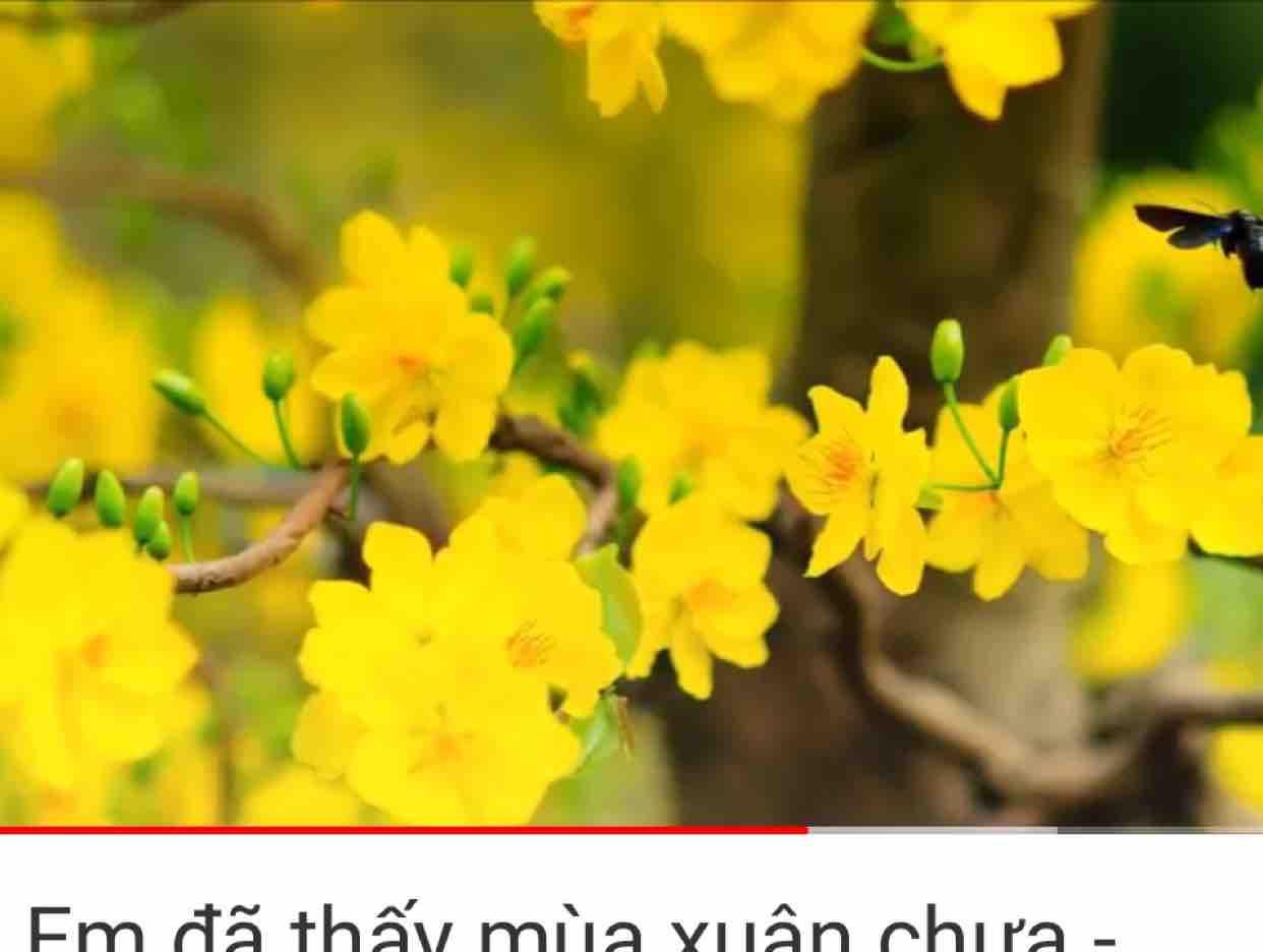 Nhớ Một Chiều Xuân ( Tác giả: cố ns Nguyễn Văn Đông ) - Hoài Niệm -