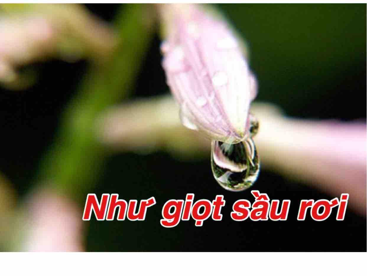 Như Giọt Sầu Rơi  (Anh Việt Thu)