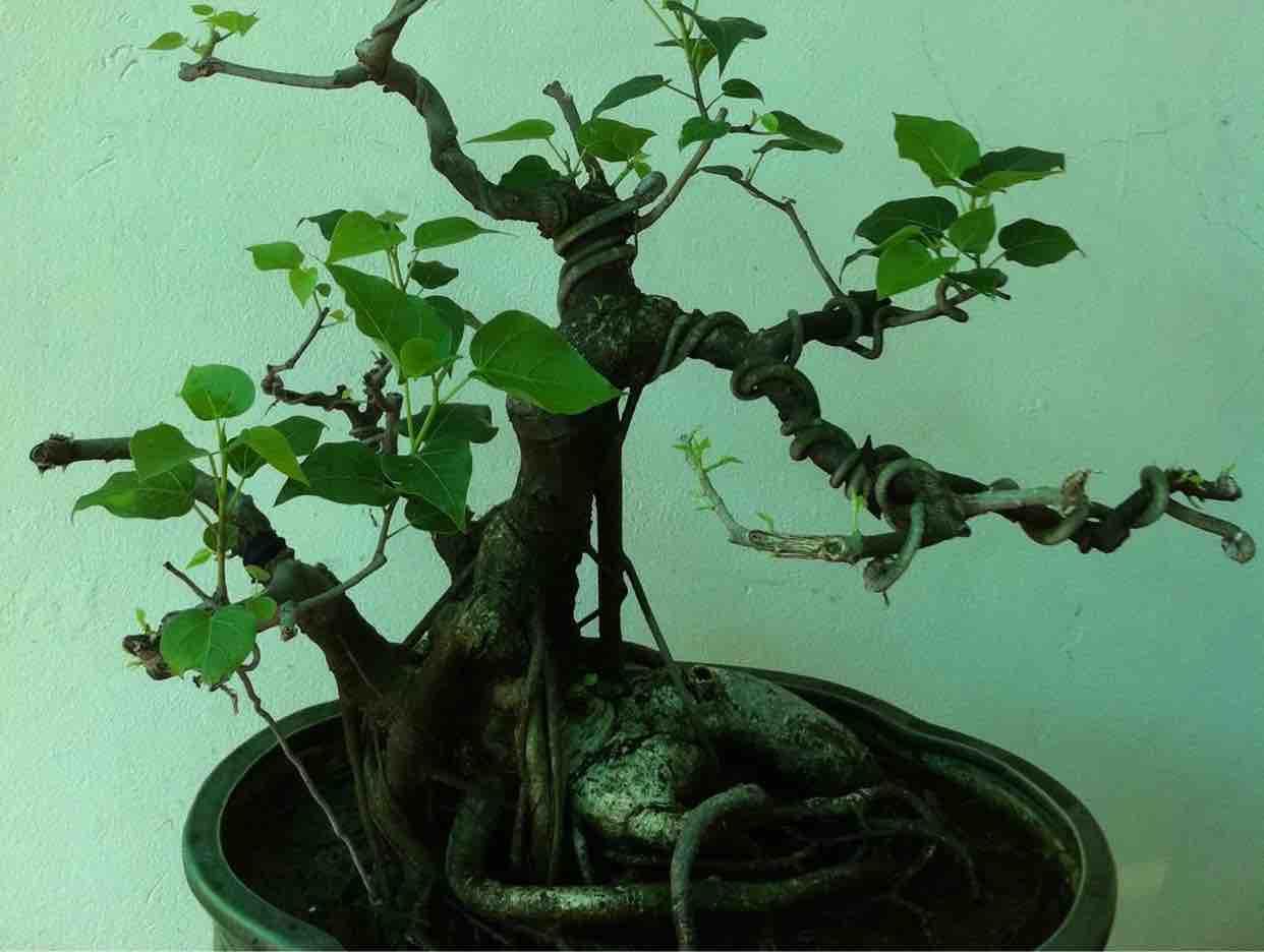 Karaoke  Sao Anh Nỡ Đành Quên   Lam Anh & Quang Lê