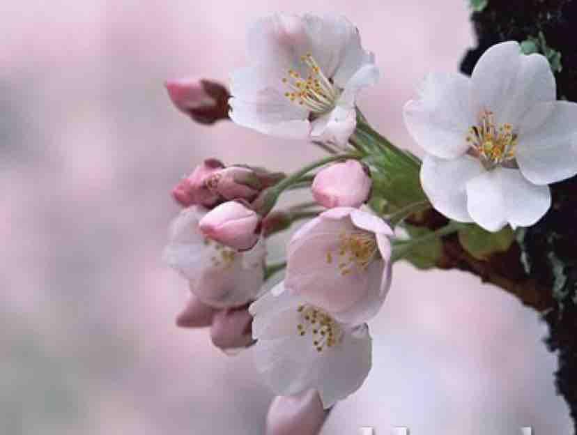 Lạc Mất Mùa Xuân