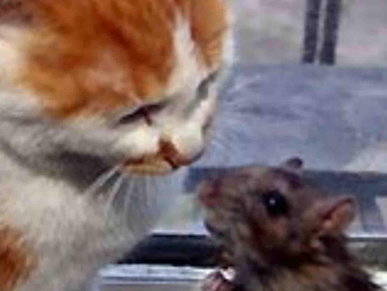 ❤️❤️❤️Vợ Chồng Mèo&Chuột ❤️❤️❤️