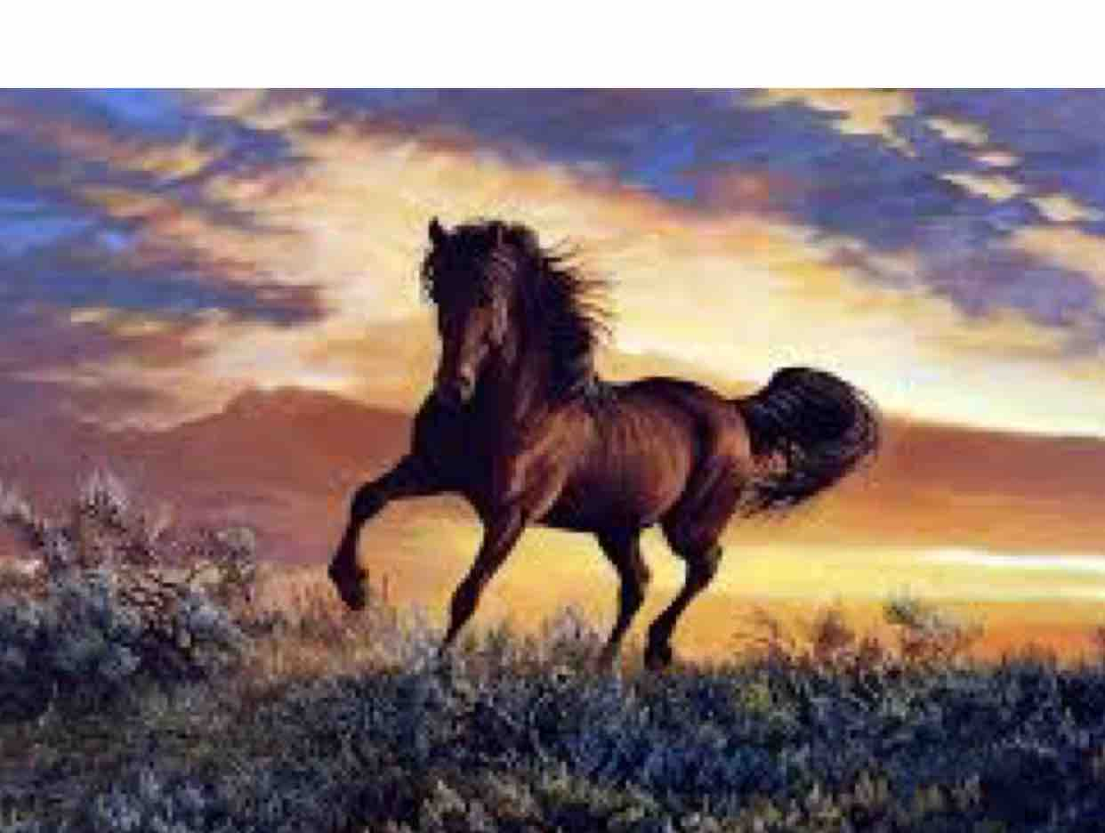 Vết Thù Trên Lưng Ngựa Hoang / Dung Lê