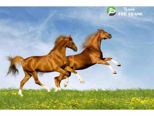 Vó ngựa trên đồi cỏ non - Karaoke/Cao Dũng...!