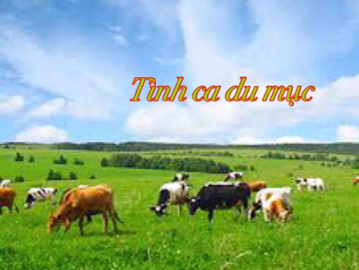 ⭐️TÌNH CA DU MỤC⭐️ HMH
