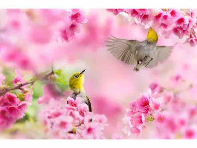 Mùa Xuân Cưới Em - May Ú