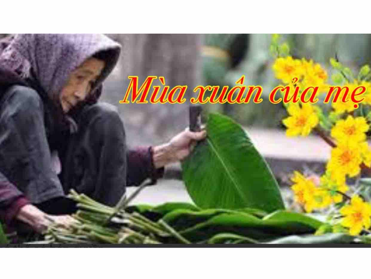 ❤️ Mùa Xuân Của Mẹ ⭐️