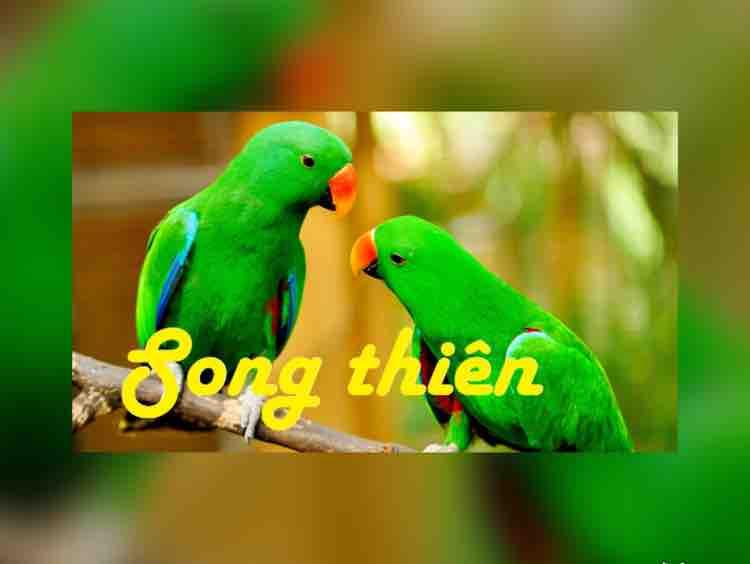 ❤️ SONG THIEN - Hãy Về Với Em Remix ❤️