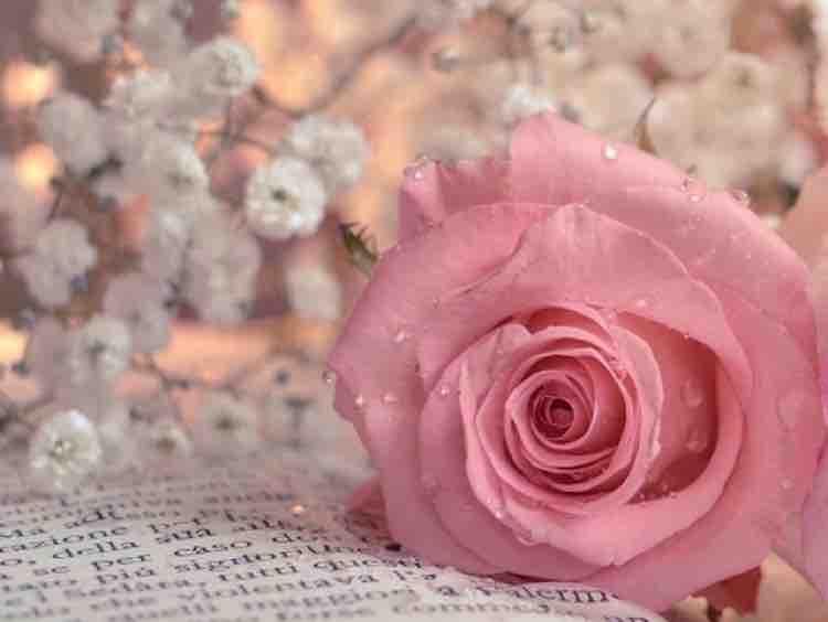 Bài Ngợi Ca Tình Yêu
