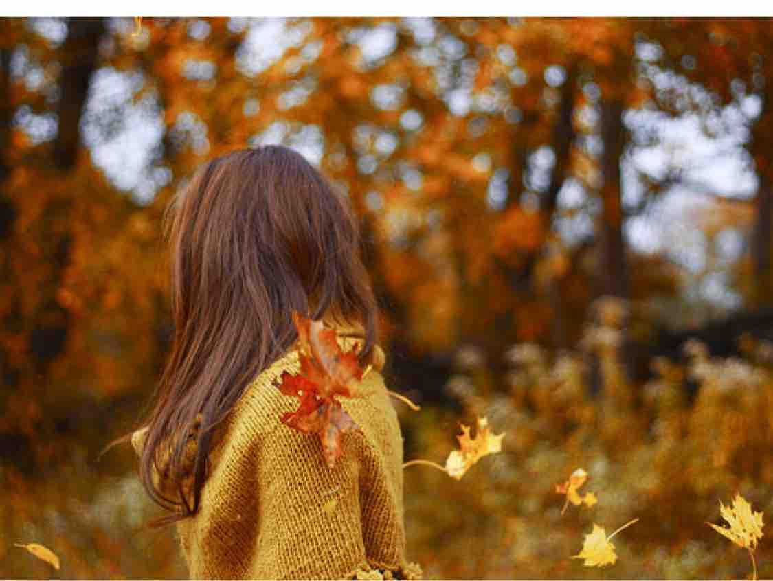 Mùa thu lá bay ...