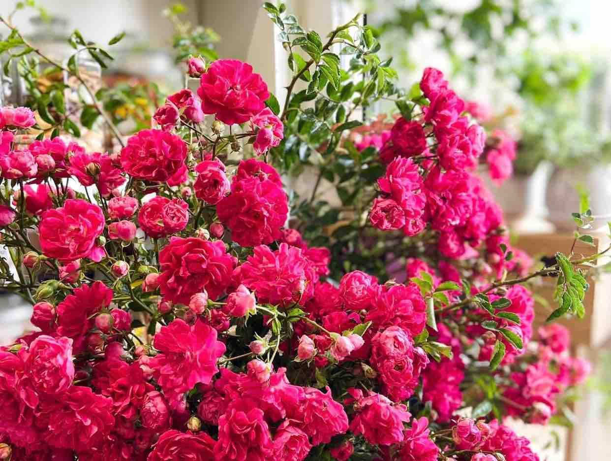 17/10/2021 Sorry - thiếu g nữ ft Vương Khang